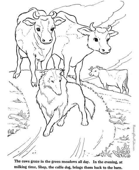 cow farm coloring page cows coloring page farm animals to print and color 212