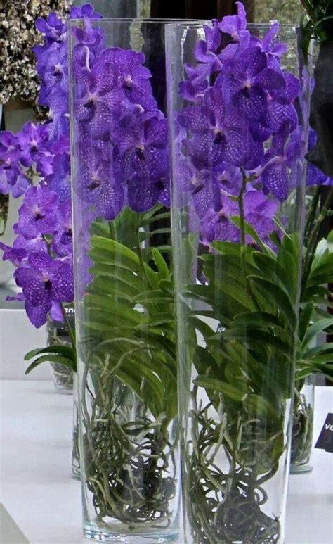 Vanda Vase by Blue Vanda Orchids In Glass Vases Vanda Orchids