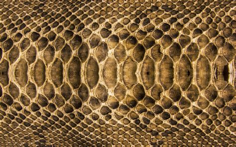 Samsung J1 Mini Leather Snake Ular 2560x1600 scales snake texture coloring skin