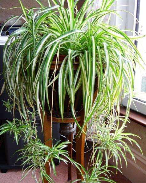 Plantes Appartement Sombre by Plante Qui Peut Survivre M 234 Me Dans Le Coin Le Plus Sombre