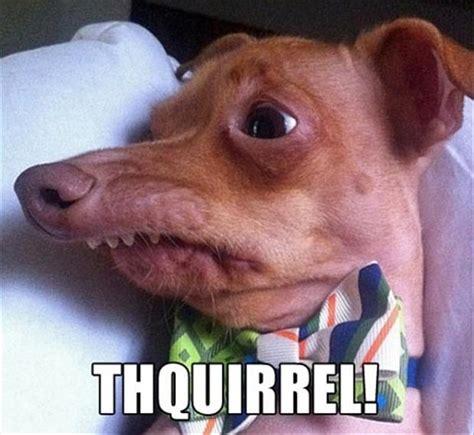 cafechoo image ugly dog meme