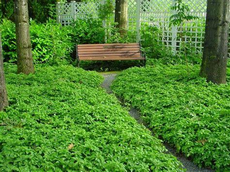 Plantes Tapissantes Sans Entretien by Plante Couvre Sol Un Tableau De Couleurs Naturelles Dans