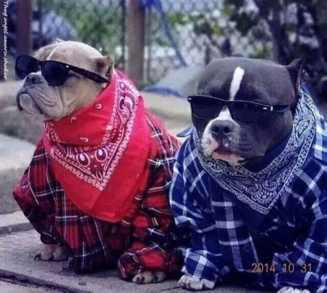 crips and bloods colors blood crip in 2019 pitbull costumes dogs