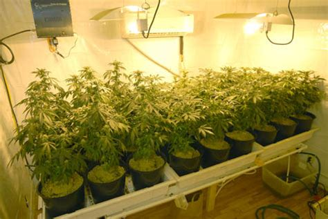 plants that grow in rooms indoor grow rooms hydroponics systems co