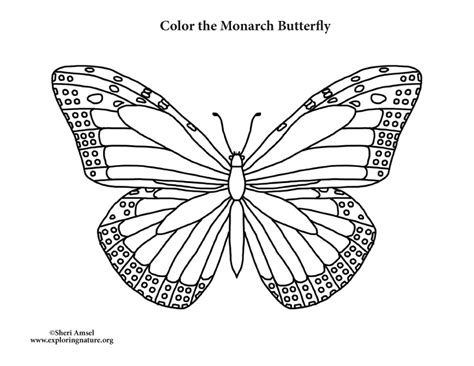 coloring page for monarch butterfly butterfly monarch coloring page