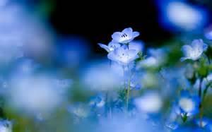Baby blue wallpaper desktop light blue wallpaper blue eyes baby
