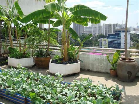 roof garden ideas rooftop garden creative landscape garden serenity