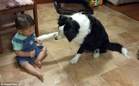 dog only eats from hand adorable oddler shares biscuit with dog who eats the whole