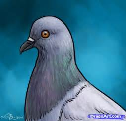 draw a pigeon how to draw pigeons step by step birds animals free