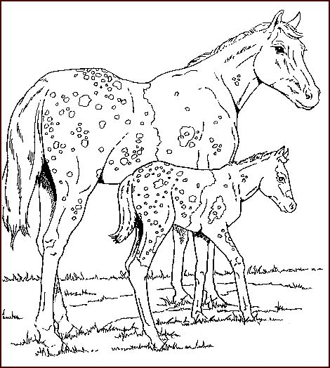 herd of horses coloring pages coloriage cheval chevaux 3 224 colorier allofamille