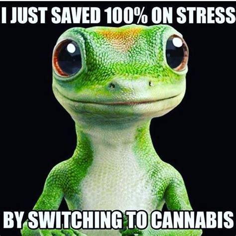Marijuana Memes - image gallery thc memes