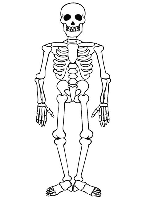 imagenes de calaveras movibles het skelet blog mens en natuur