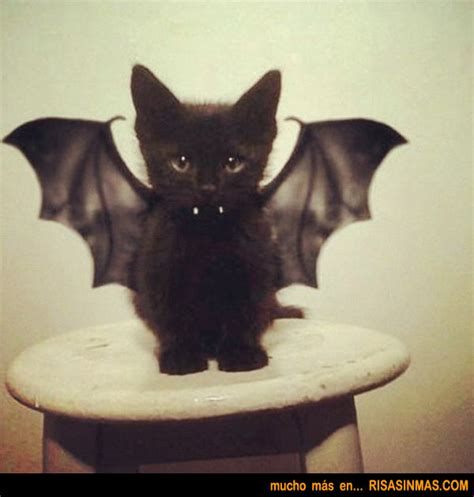 imagenes halloween gato imagenes de gatos para hallowen imagui