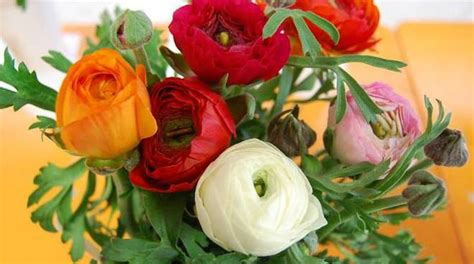 fiori recisi nomi premio qualit 224 sanremo fiori ecco i nomi dei vincitori