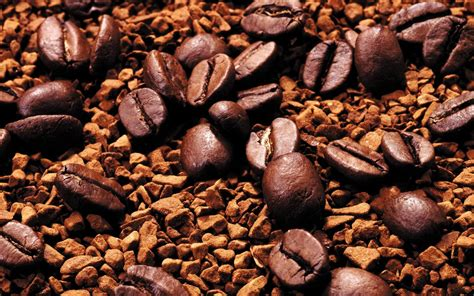 coffee seed wallpaper coffee beans wallpapers