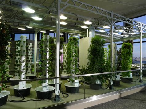 ohare airports vertical aeroponic garden takes flight