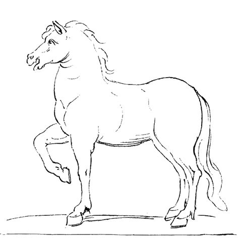 black and white coloring pages of horses black and white horse drawings art catalog