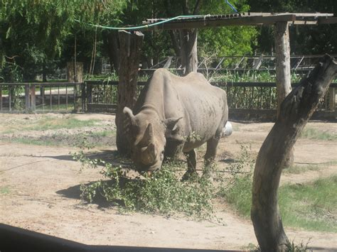 Garden City Zoo Animals File Rhinoceros At Richardson Zoo Garden City Ks Img