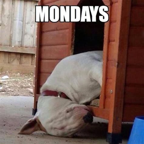 Mondays Meme - mondays dog meme meme collection