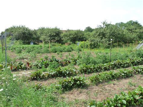 big vegetable garden seasonal ontario food so how big should your vegetable