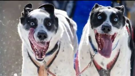 fotos que se mueven de risa fotos de animales graciosos y divertidos tomadas en el