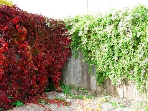 plants that drape over walls concrete block retaining wall