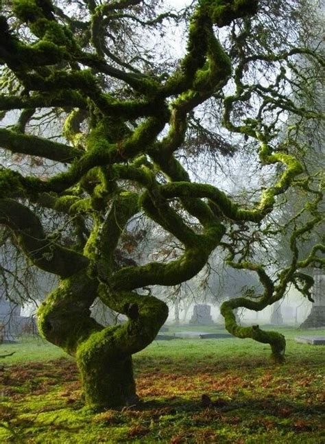 amazing tree beautiful ballet and awesome on pinterest