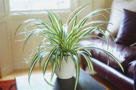 cuidado plantas interior el cuidado de las plantas de interior en invierno centro