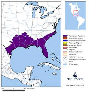 alligator mississippiensis usa national phenology network