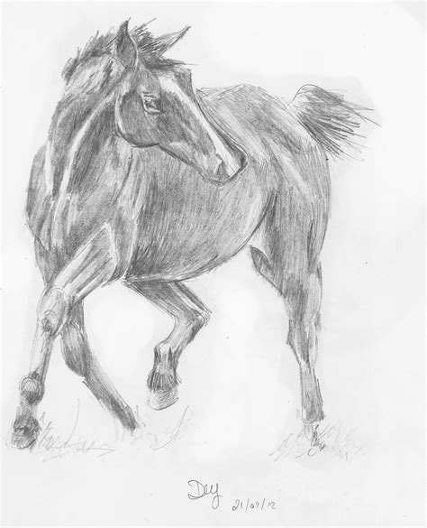 Sketches Horses by Pencil Sketch Of Costa The By Wenchkin On Deviantart