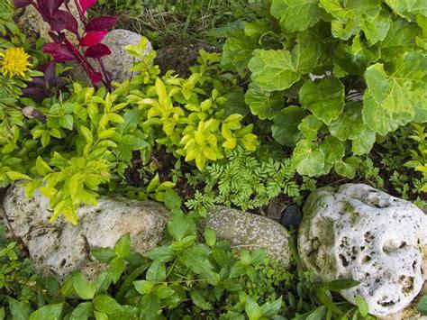 Glow Rocks Garden Garden Madang Ples Bilong Mi