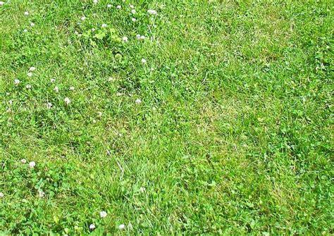 Klee Vom Rasen Entfernen 5163 by Rasen