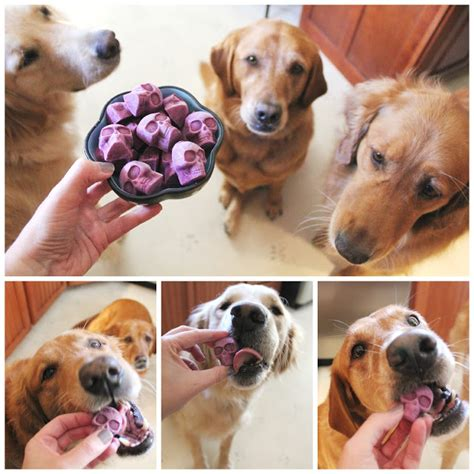 blueberries and dogs frozen blueberry skull treats for