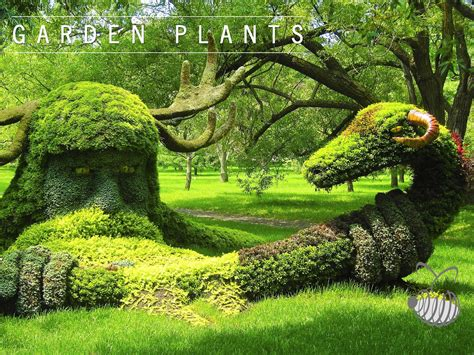 garden plants ornamental plants landscape design