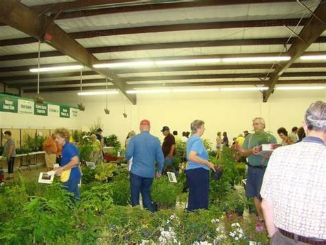 all the latest dirt asters the last fall flowers gardeners dirt master gardener plant sales have really