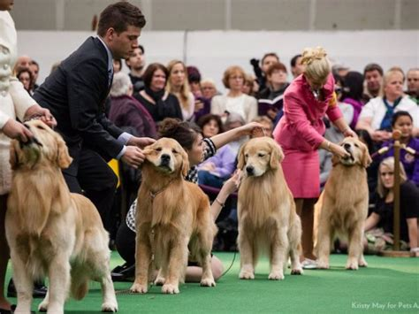 what channel is westminster show on westminster show 2017 live new breeds judging criteria