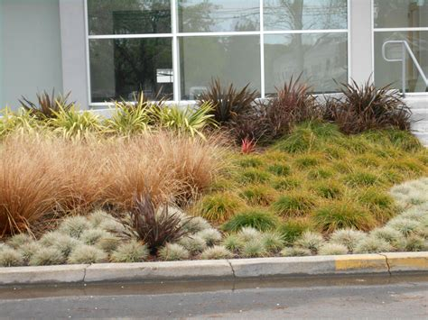 bay area landscaping drought tolerant ground cover plants landscaping bay area