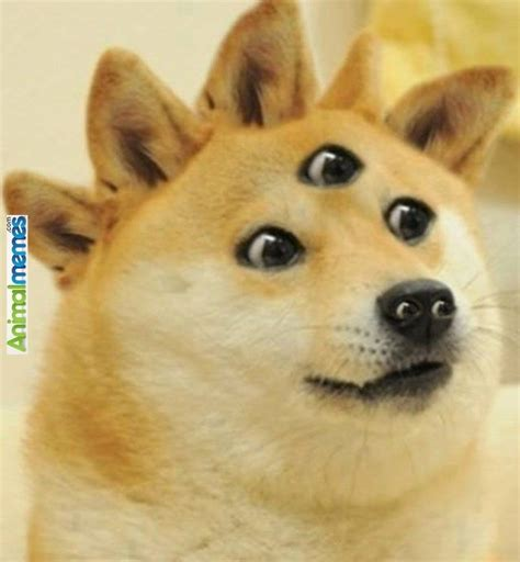 Doge Meme Pictures - dog memes doge our lord dog memes pinterest lord