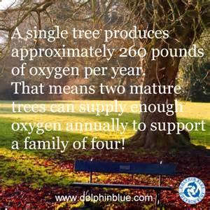 fact friday trees dolphin blue blog