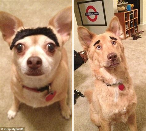 dogs with eyebrows 20 hilarious photos of dogs with eyebrows that will make