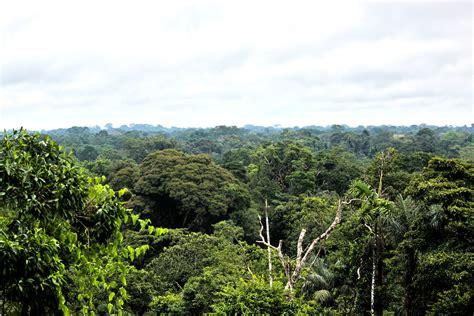 canopy amazon canopy canopy amazon