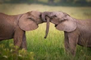 animal mating habits humanized