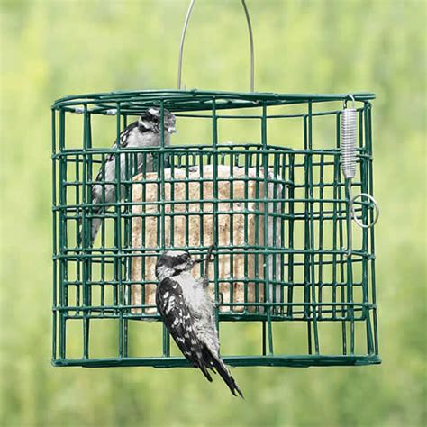 duncraft com duncraft squirrel proof suet sanctuary feeder