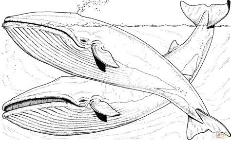 minke whale coloring page desenho de duas baleias azuis npo mar para colorir