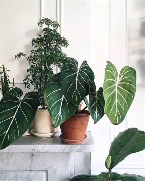 title mit bildern indoor pflanzen dekor
