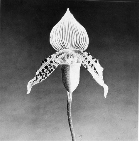 mapplethorpe fiori museo lopi 249 amazing photographers robert mapplethorpe 1