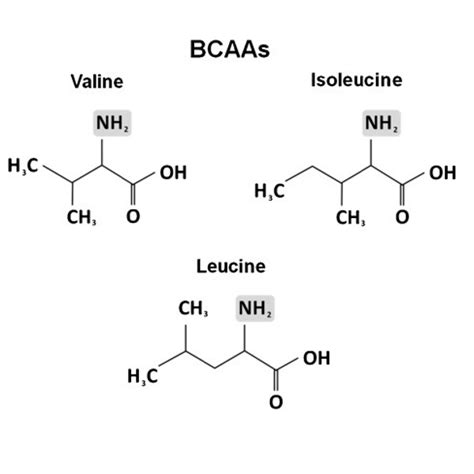 creatine or amino acids facts with jerry brainum are bcaas overrated