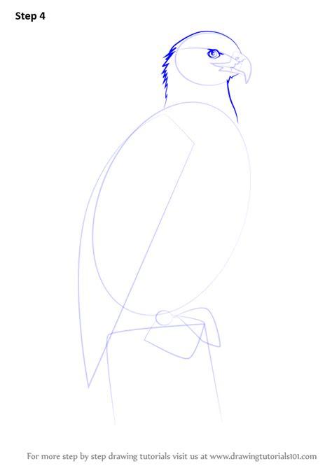 learn   draw bald eagle full body bird  prey step