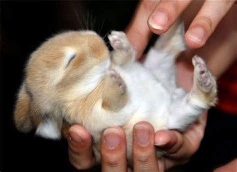 ticklish pug ticklish bunny bunny rabbits photo 19638197 fanpop