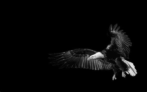 black eagle hd wallpaper the eagle black background wallpapers and images